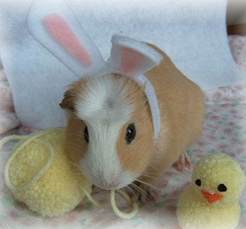 Easter Bunny Impersonators Cuteness Overflow
