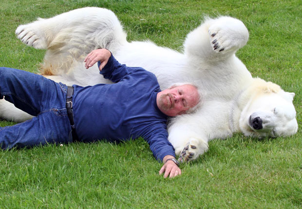 polar-bear (1)
