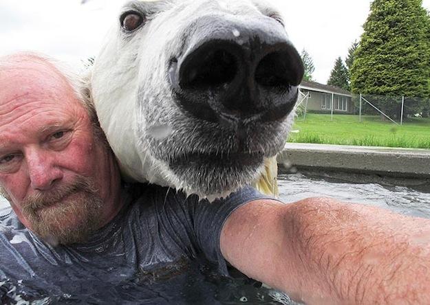 polar-bear-nose