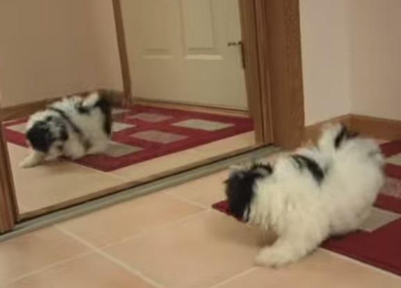 puppy-mirror2