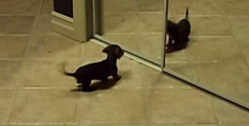 puppy-mirror3