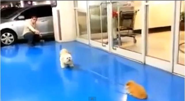 puppydragging