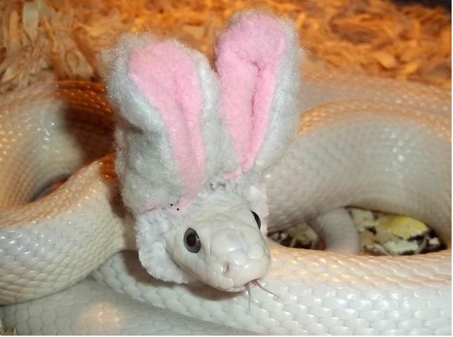 snakebunny
