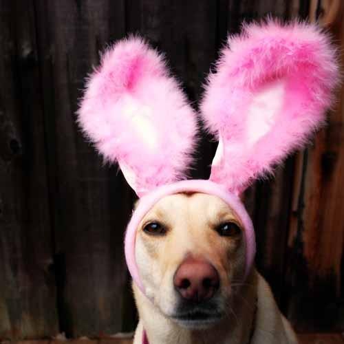 stylesaveus-dog-with-bunny-ears