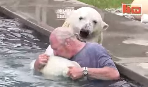 swim-polar-bear