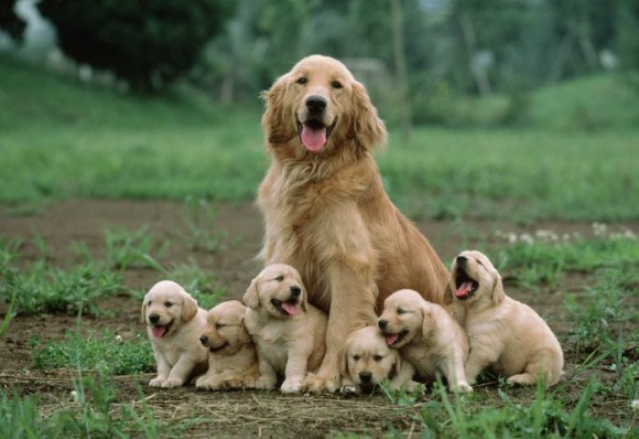 Image result for mother dog & puppies