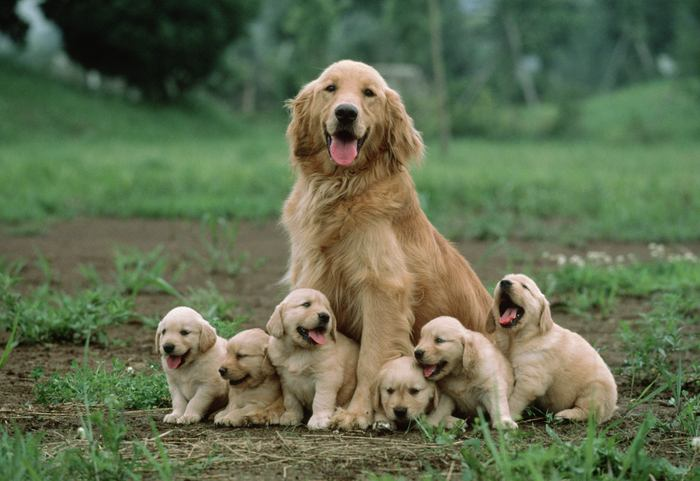 16 Mother dog sitting with her puppies