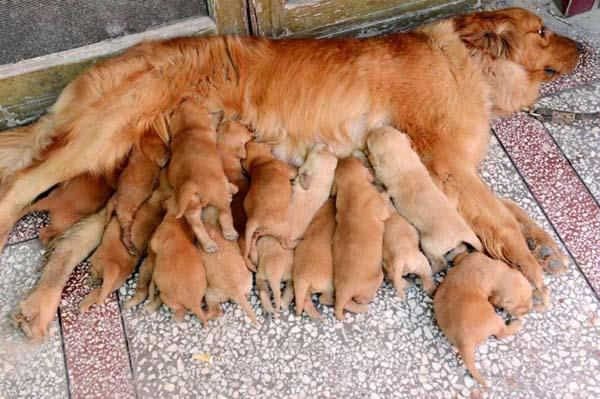 Dog-Moms-and-Puppies