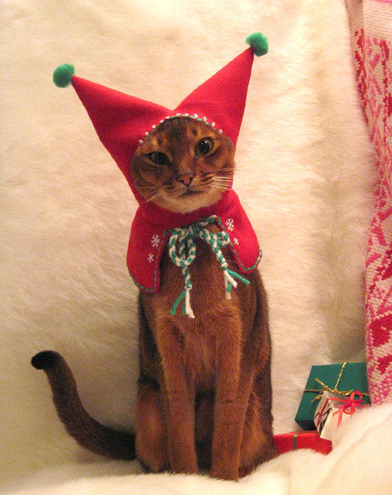 animal-cat-christmas-costume-cute-Favim.com-249668