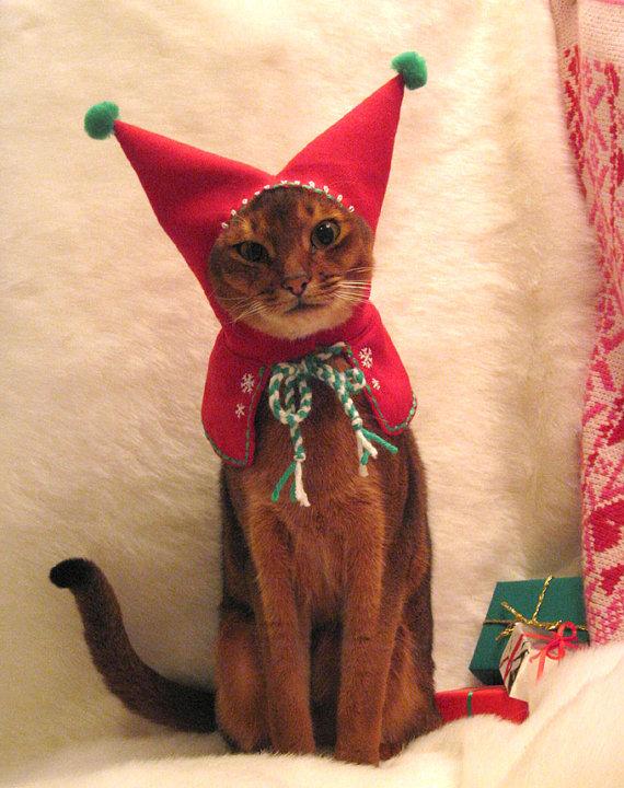 animal-cat-christmas-costume-cute-Favim.com-249668