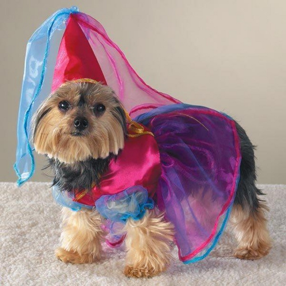 animals-halloween-costumes--large-msg-134790893935