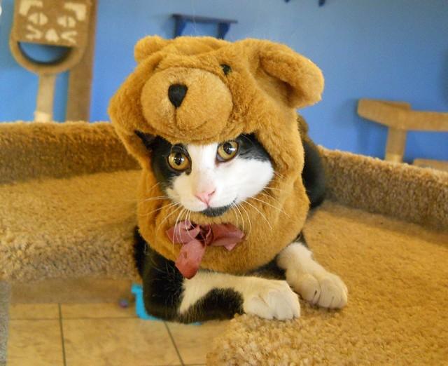 cat-dog-e1381255557904