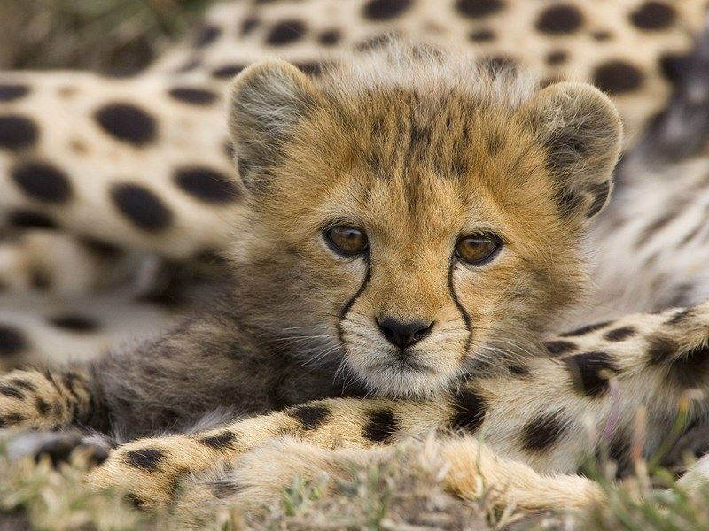 Cutest African Animals | Cuteness Overflow