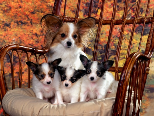 dogs_lon_mom_and_puppies-t2