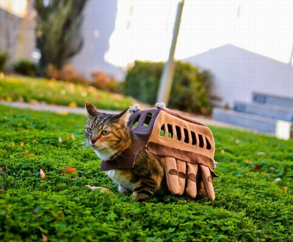 l-Catbus-Cat-Costume