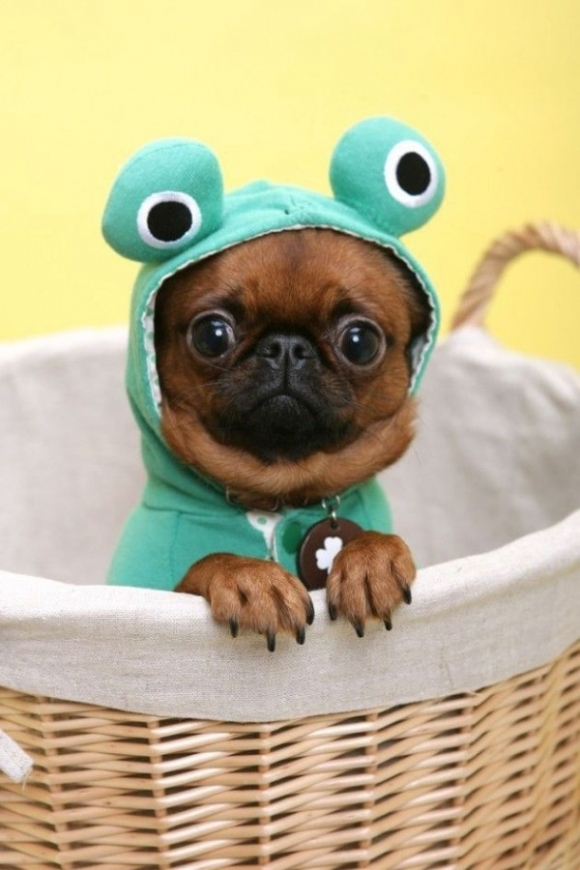 l-Froggy-Puppy