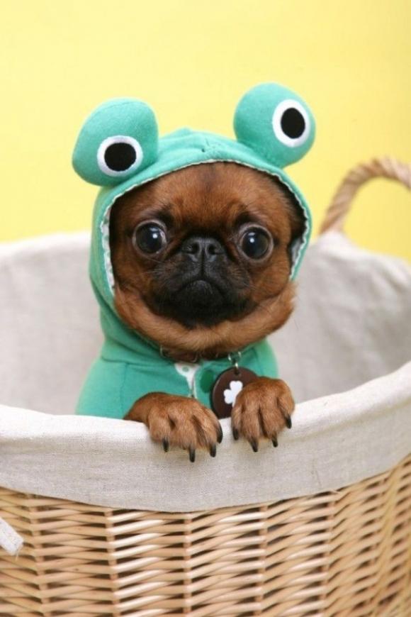 l-Froggy-Puppy