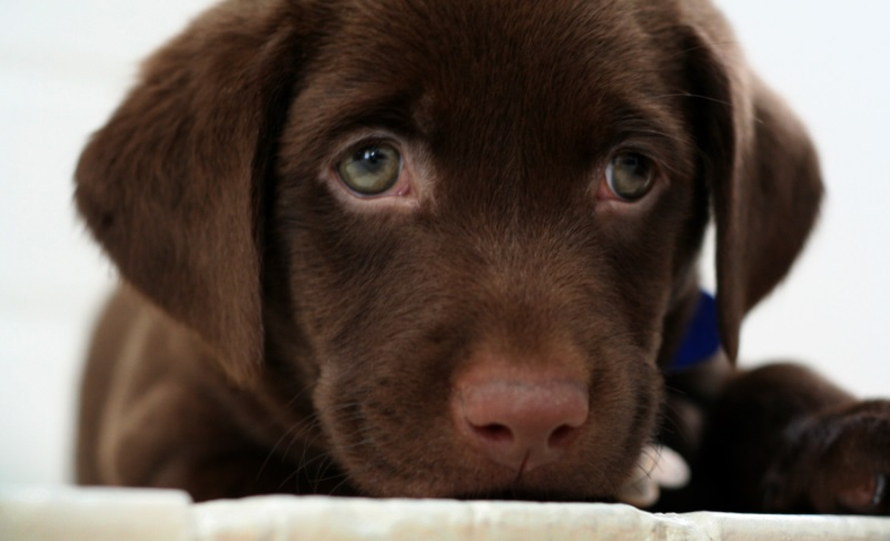 adorable-dogs (1)