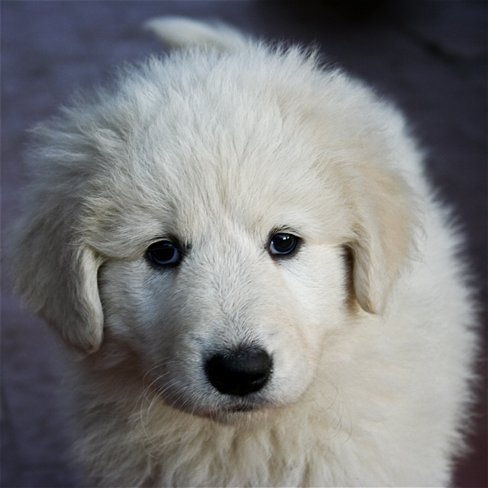 adorable-dogs (10)