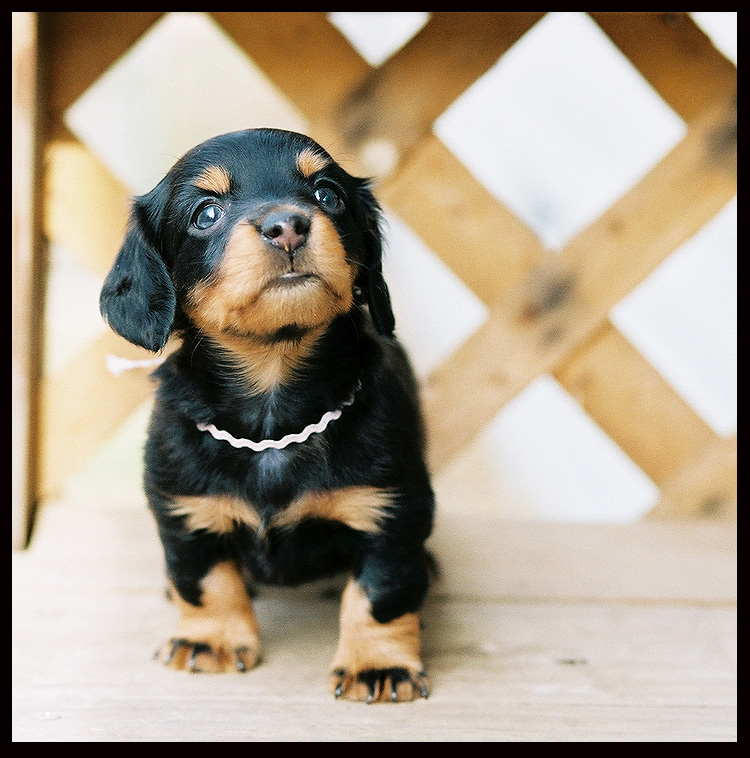 adorable-dogs (11)