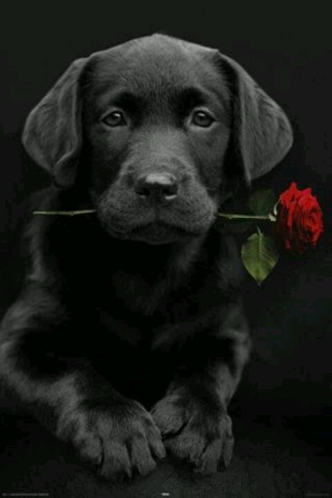 adorable-dogs (2)