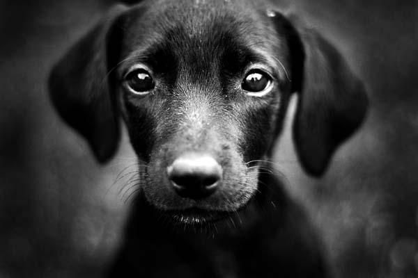 adorable-dogs (9)