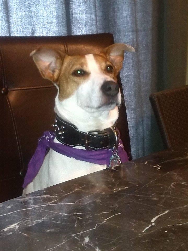 user-uploaded-pets (15)