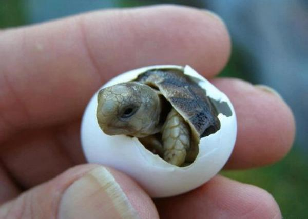 baby-turtles (1)