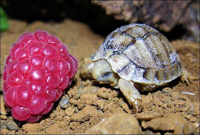 baby-turtles (11)