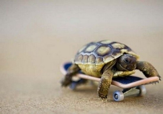 baby-turtles (12)