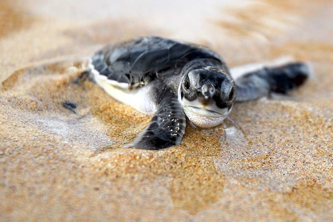 baby-turtles (5)