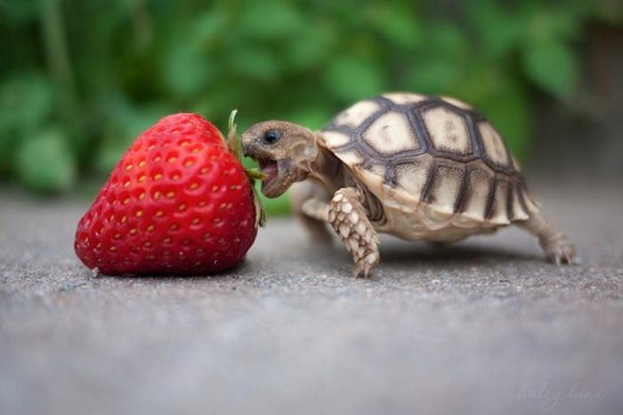 baby-turtles (6)