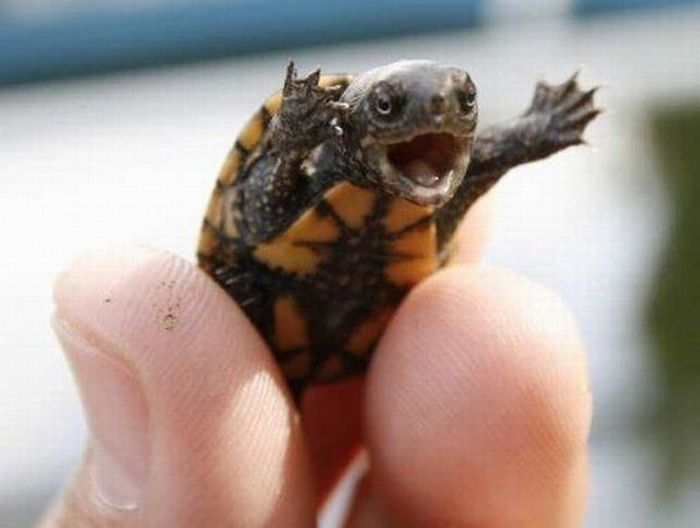 baby-turtles (9)