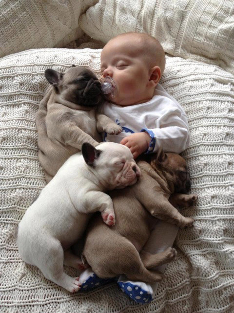 best-dog-pictures (11)