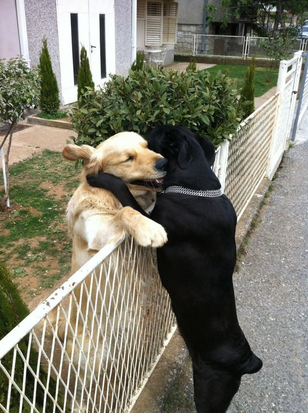 best-dog-pictures (2)