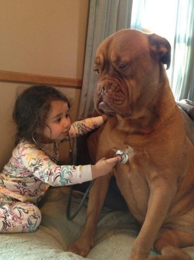 best-dog-pictures (29)