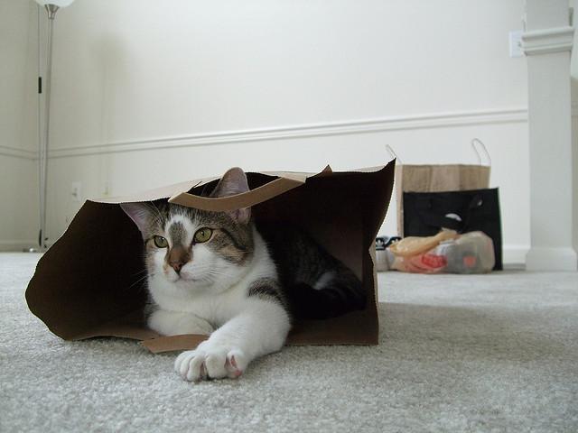 Cat-Bag-1