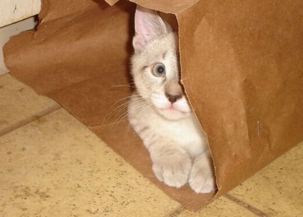 Cats_in_Bags_4