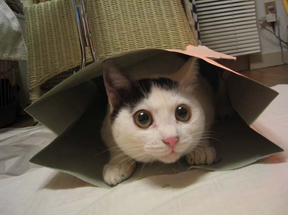 cat-in-a-bag1