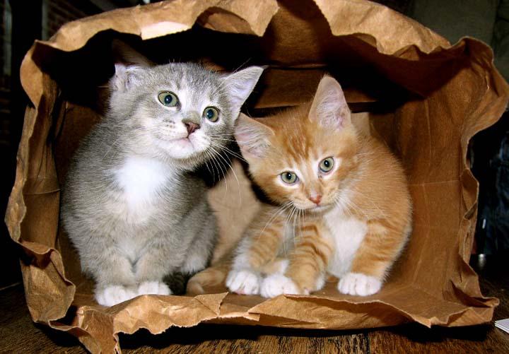cat-picture-bag-10