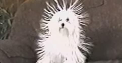 static-dog