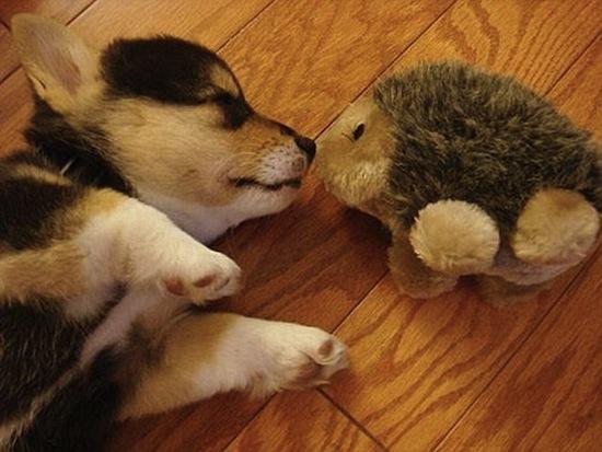 Puppy-kiss