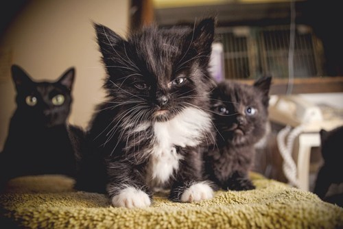 black frowny cats