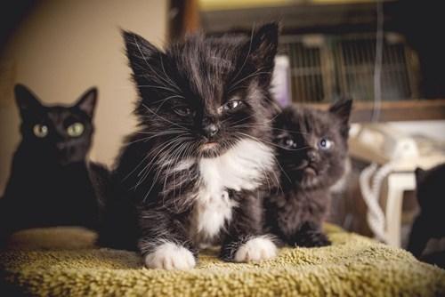 Cute Grumpy Cats Cuteness Overflow