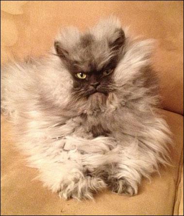 colonel-meow3