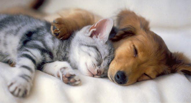 cute puppy kitten sleeping