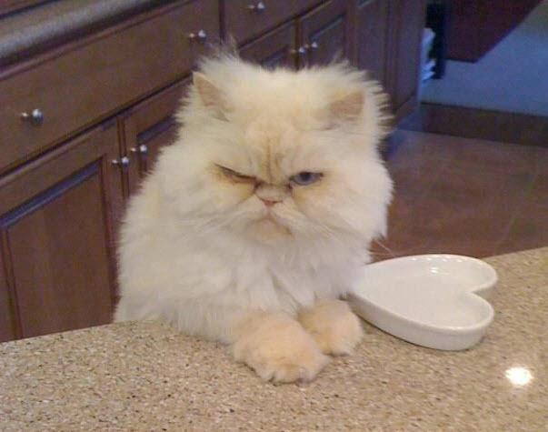 grumpy blonde
