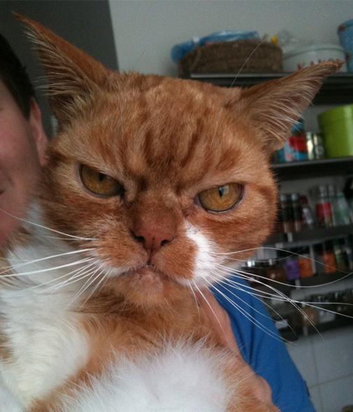 orange-grumpy-cat