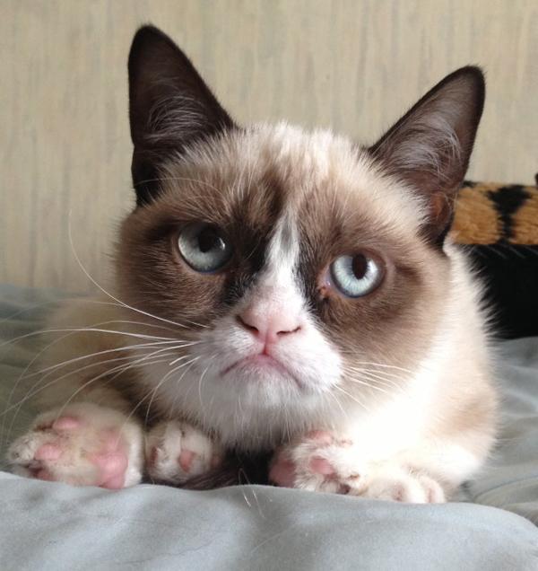 reddit-grumpy-cat-2