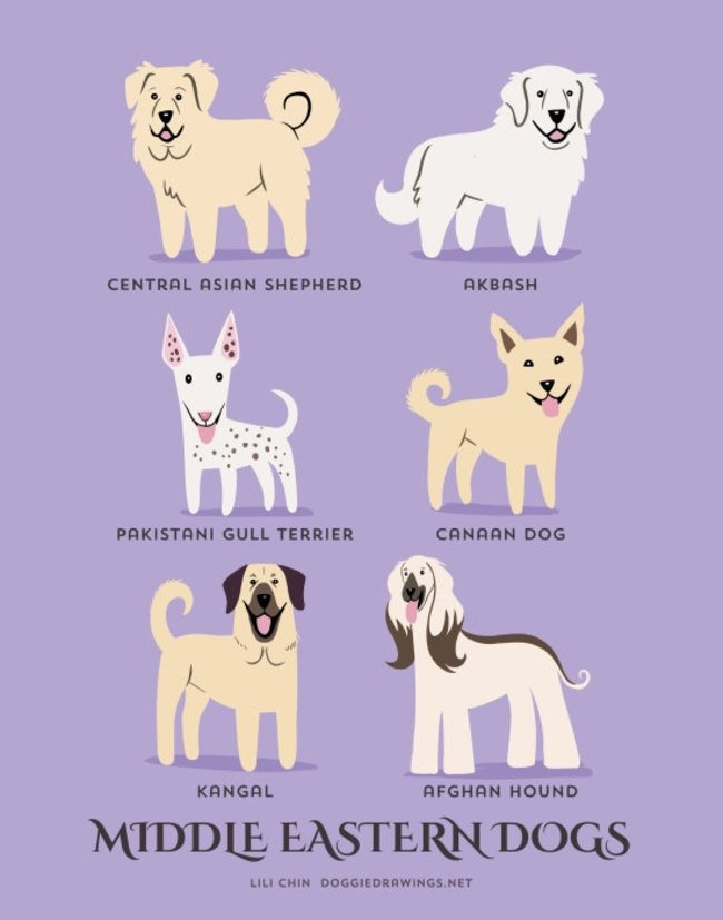 dogs-of-the-world (1)